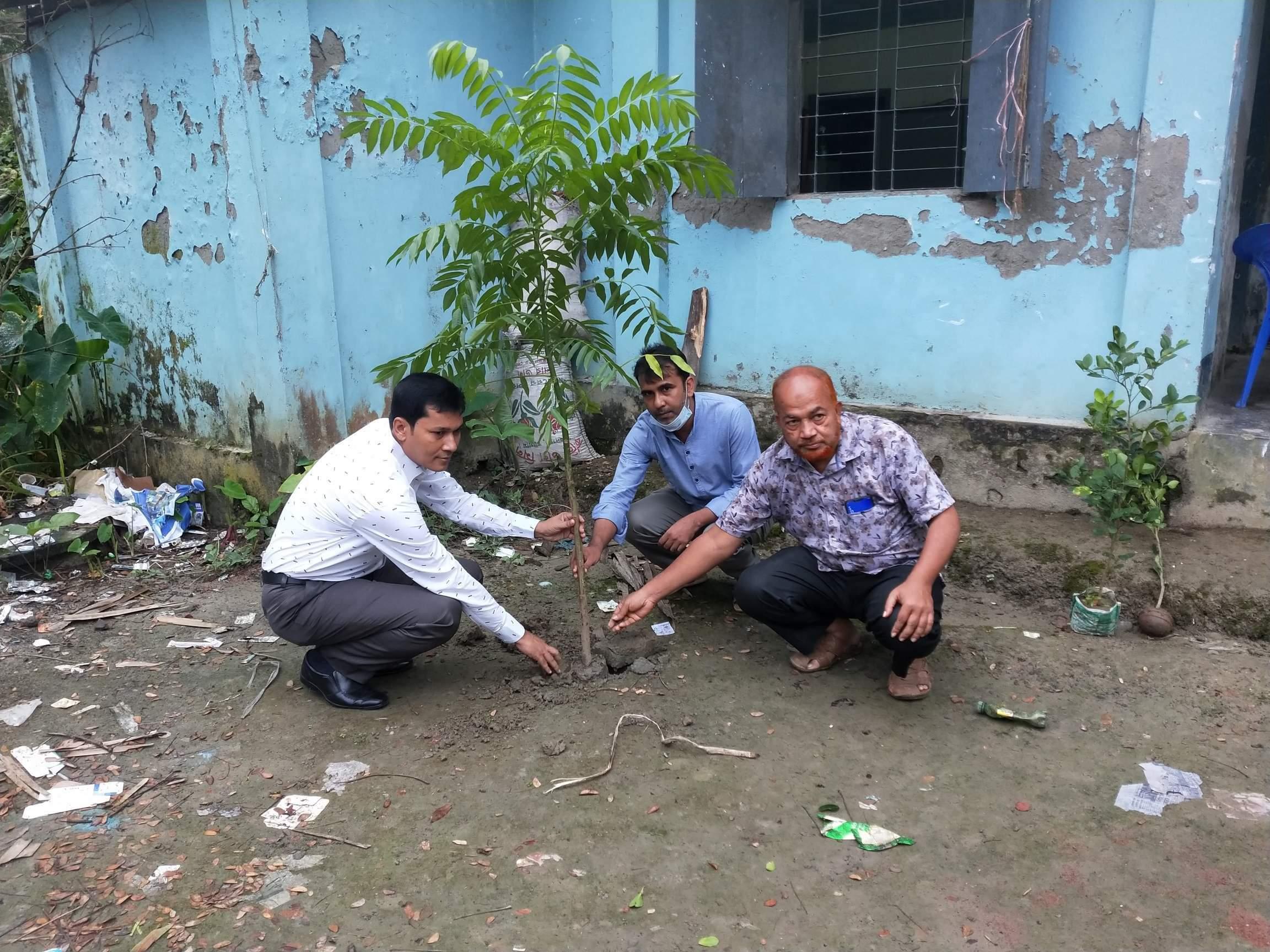 মুজিববর্ষ উপলক্ষে চরমোনাই ভূমি অফিসের উদ্যোগে বৃক্ষ রোপণ